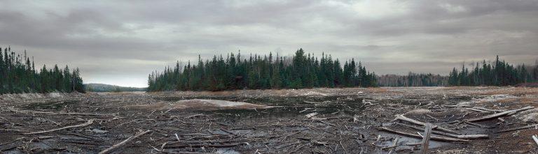 Les bois morts, 2000
