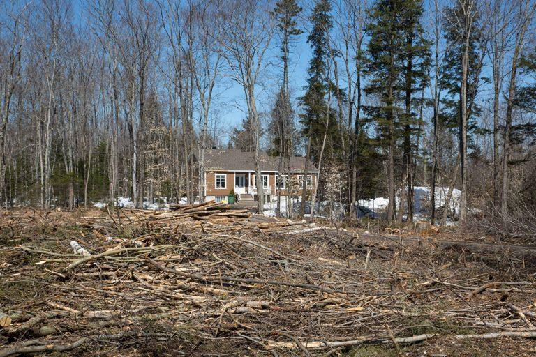 Ma cabane au Canada, 2016 - 2017
