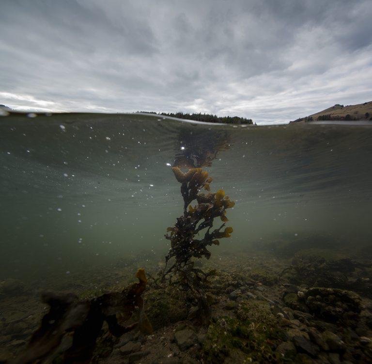 Cascade Head (Fucus Gardneri), 2019
